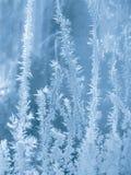 djupfryst exponeringsglas Royaltyfri Fotografi