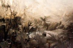 djupfryst fönster Royaltyfri Bild