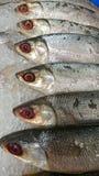 Djupfryst fisk för att laga mat på marknaden royaltyfria foton
