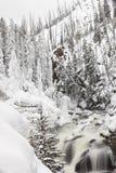 Djupfryst flod i den Yellowstone nationalparken under vinter Arkivbilder
