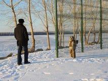 Djupfryst flod i Sibirien Arkivfoto