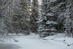 Djupfryst flod i skog Arkivbilder
