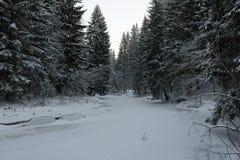 Djupfryst flod i vinterskog Arkivfoton