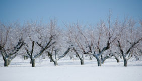 djupfryst fruktträdgård Arkivfoto