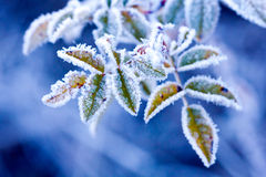 Djupfryst frunch Arkivfoto