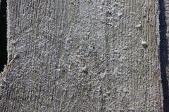 Djupfryst gammalt trä Arkivfoto