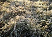 djupfryst gräs Royaltyfri Fotografi