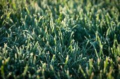 Djupfryst gräs Arkivbilder