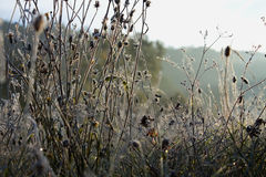 djupfryst gräs Arkivbild