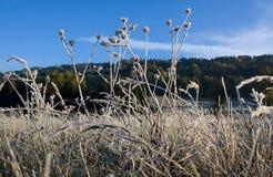 djupfryst gräs Royaltyfria Foton