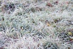 djupfryst gräs Royaltyfria Bilder