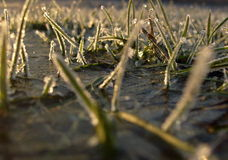 djupfryst gräs Arkivfoton