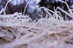 Djupfryst gräs i is arkivfoton