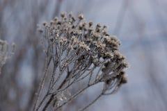 Djupfryst gräs på vinter Royaltyfri Fotografi