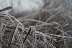 Djupfryst gräs som är berört vid vinter arkivfoton