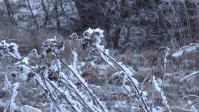 Djupfryst gräs under snovräkningen svänger i den kalla vinden arkivfilmer