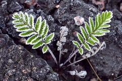 djupfryst grön leaf arkivfoto