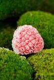 Djupfryst hallon på gröna Moss Close-Up Royaltyfri Fotografi