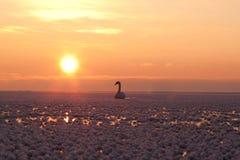 djupfryst hav Arkivfoton