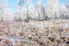 Djupfryst hed på vintern royaltyfria foton