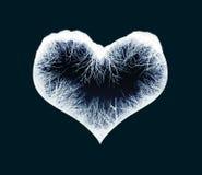 djupfryst hjärta Royaltyfri Foto