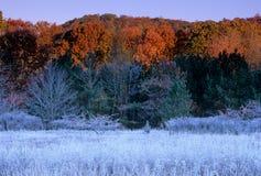 djupfryst horizantal äng Arkivfoto