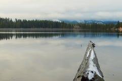 Djupfryst inloggning en sjö Arkivfoto