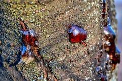 djupfryst klibbig fruktsaft för fast kåda på skället av en trädstam arkivfoton
