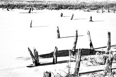 djupfryst lake Royaltyfri Foto