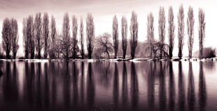 djupfryst lake Fotografering för Bildbyråer