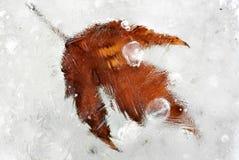 djupfryst leaf Arkivfoton