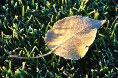 Djupfryst Leaf Fotografering för Bildbyråer