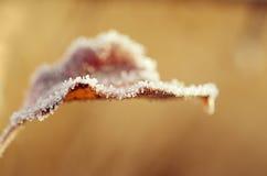 Djupfryst leaf Arkivfoto