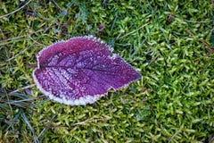 Djupfryst leaf Royaltyfri Foto