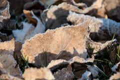Djupfryst leaf Royaltyfri Bild