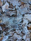 djupfryst leafs Arkivfoton