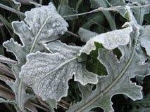 djupfryst leaves Royaltyfri Fotografi