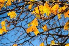djupfryst leaves Royaltyfria Foton