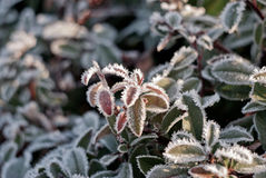 djupfryst leavesmorgon Fotografering för Bildbyråer