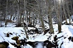 Djupfryst liten vik i skogen Royaltyfri Bild