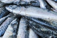 Djupfryst makrill Djupfryst grupp av fisken med is atlantisk fisk mackerel Makrillmodell Makrilltextur Arkivbilder