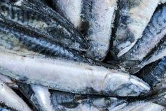 Djupfryst makrill Djupfryst grupp av fisken med is atlantisk fisk mackerel Makrillmodell Makrilltextur Arkivbild