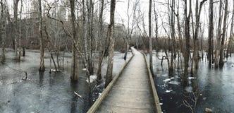 djupfryst marsh arkivfoto
