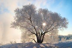 djupfryst morgon Arkivfoto