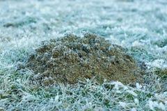 Djupfryst mullvadshög på vintermorgon Royaltyfri Bild