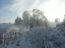 djupfryst natur arkivbild