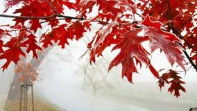 djupfryst natur Fotografering för Bildbyråer