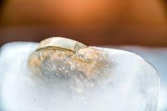Djupfryst ny britt ett pundmynt upp nära makro inom iskuber Royaltyfri Foto