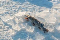 Djupfryst pik med stycken av is på en djupfryst sjö i vinter Arkivfoton