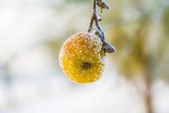 Djupfryst äpple i vinter Royaltyfri Foto